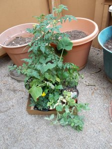 vegetable plants, gardening